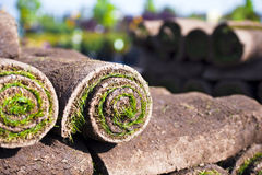 Grass in rolls ready for the lawn. Landing of roll turf green grass stockpiled on one another for use as a material for the work on the home landscape or lawn Stock Photography