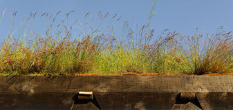 Grass roof. Royalty Free Stock Photo