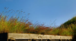 Grass roof. Stock Photos