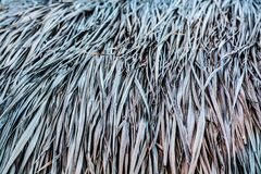 Grass roofs Stock Image