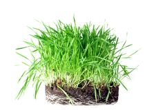Grass from roots. On white background Stock Photo