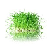 Grass from roots. On white background Royalty Free Stock Photos