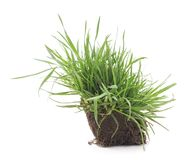 Grass with roots. Royalty Free Stock Photos