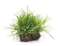 Grass with roots. Dreen grass with roots on a white background Royalty Free Stock Photography