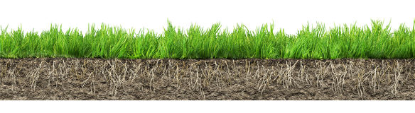 Grass with roots and soil Stock Photos