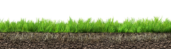 Grass with roots Royalty Free Stock Images