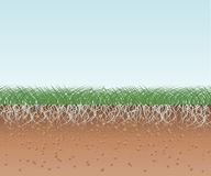 Grass with Roots and Soil Royalty Free Stock Photography