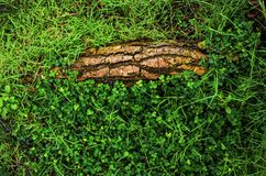 Grass roots view top view. And root Royalty Free Stock Image