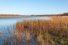 Grass and rushes growing in wetlands Royalty Free Stock Photography