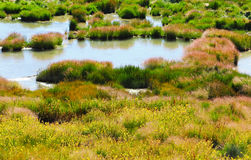 Grass and Rushes in Mud Volcano,Yellowstone national park Royalty Free Stock Photography