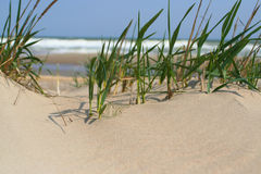 Grass on sand Royalty Free Stock Image