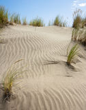 Grass in sand. On a desert or a sandy beach Royalty Free Stock Photography