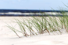 Grass in sand. Royalty Free Stock Images