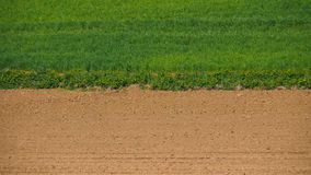 Grass and sand. The line of demarcation between grass and sand Stock Photo