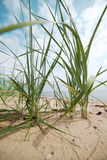Grass and sand. Stock Photos