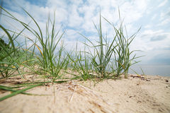 Grass and sand. Royalty Free Stock Image
