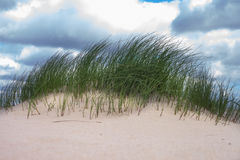 Grass in sand. Stock Image