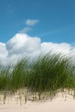 Grass in sand. Stock Photos