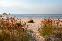Grass, sand and Baltic see. Royalty Free Stock Photography