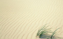 Grass on sand Royalty Free Stock Photos