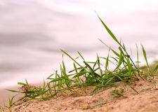 Grass sand beach close up Stock Photography