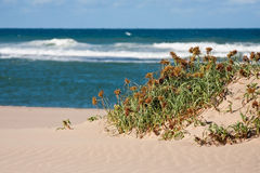 Grass on a sand dune Stock Image