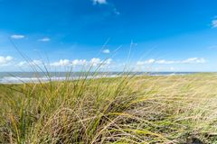Grass on sand dune with ocean behind royalty free stock images
