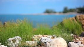 Grass on sand dune, stones and azure sea water of stock video