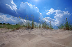 Grass on sand dunes on Baltic Sea beach, Latvia, Ventspils Royalty Free Stock Photography