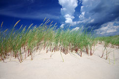 Grass on sand dunes on Baltic Sea beach, Latvia, Ventspils Stock Images