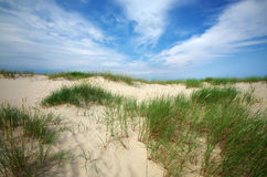 Grass on sand dunes on Baltic Sea beach, Latvia, Ventspils Royalty Free Stock Photos