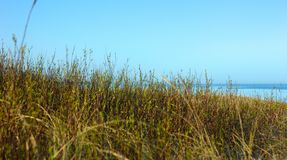 Grass field on sand dunes near sea royalty free stock photo