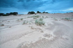 Grass on sand dunes over blue sky Royalty Free Stock Photography
