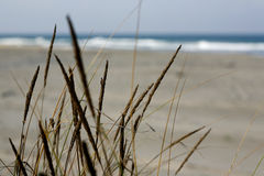 Grass in sand dunes in sea Royalty Free Stock Photography
