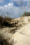 Grass in sand dunes in sea Royalty Free Stock Photos