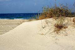 Grass in sand dunes in sea Stock Photo
