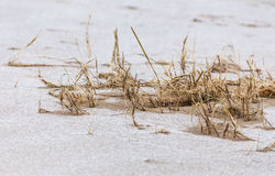 Grass on the sand Royalty Free Stock Photography
