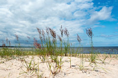 Grass in sand. Royalty Free Stock Photography
