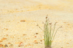 Grass on sand Stock Photography