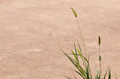 Grass and sand Royalty Free Stock Photo