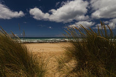 Grass Sand Sea and Sky. Tall Grasses are prominent in this image Royalty Free Stock Images