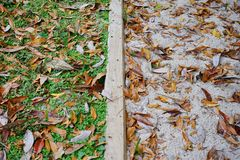 Grass, sand and leaf. Grass and sand separated by wood Royalty Free Stock Image