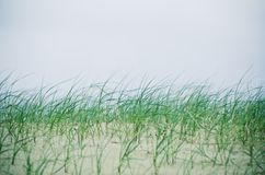 Grass on the sandy Stock Image