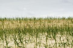 Grass on the sandy Royalty Free Stock Images