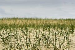Grass on the sandy Stock Photo