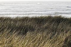 Grass on the sandy Stock Photography