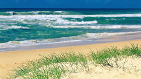 Grass and sandy beach on sunny day on Sunshine Coast stock video