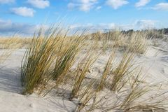 Grass at sandy dune, baltic sea stock image