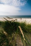 Grass on the sandy and windy Baltic seashore royalty free stock image