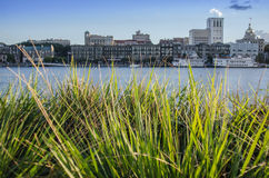 Grass with Savannah Riverfront in Background Stock Photo